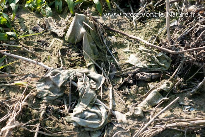 Lingettes dans les sédiments en Loire