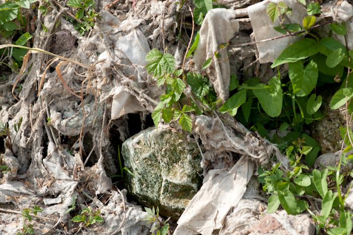 Lingettes incrustées dans la végétation