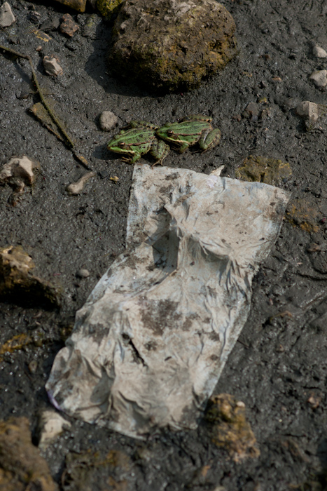 Grenouilles et serviettes se partagent l'écosystème...