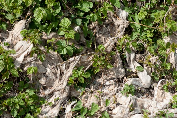 La végétation n'a pas encore complètement pris le dessus sur les lingettes en ce mois de juin :-)