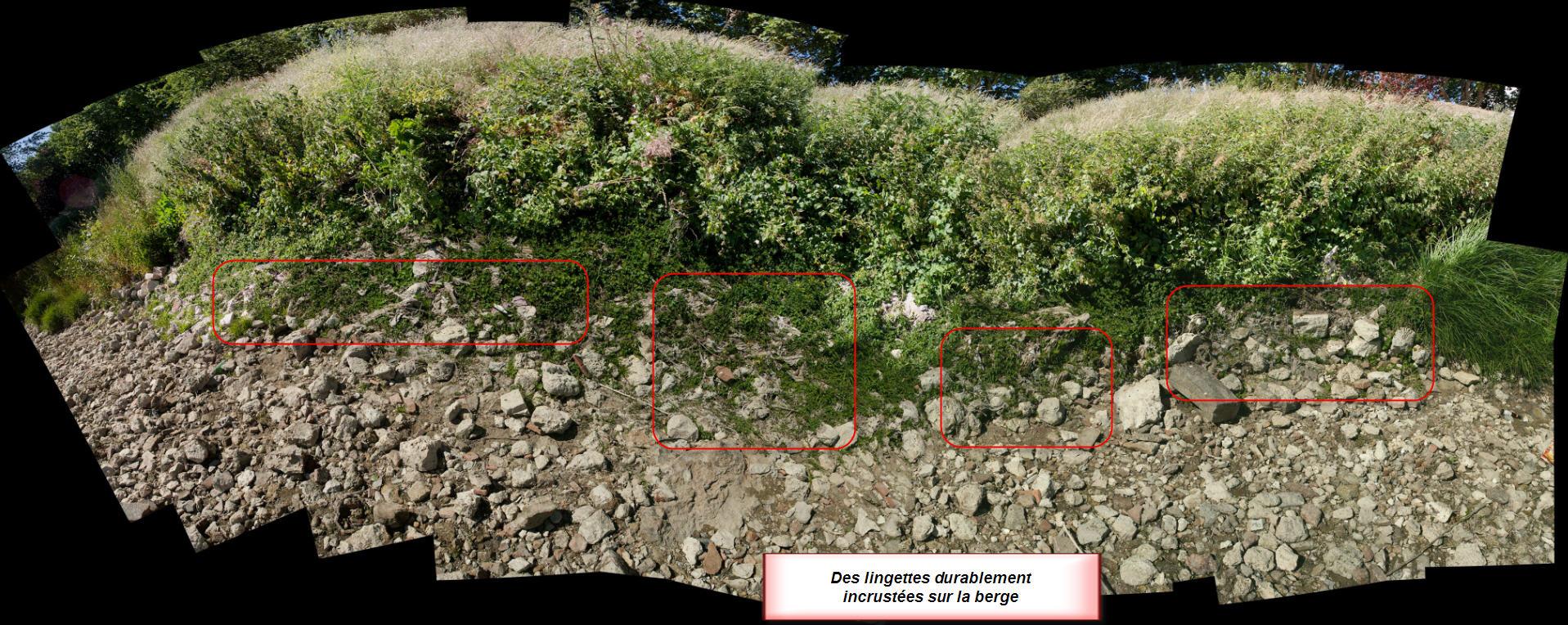 Etendue de lingettes durablement incluses dans la végétation et les sédiments (cliquez pour zoomer)