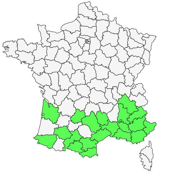 Répartition d'Aphyllanthes monspeliensis L. ( Aphyllanthe de Montpellier  )