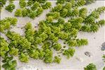 Photo 11/12 Honckenya peploides (L.) Ehrh.